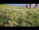 берег облюбованный нудистами р.Сясь