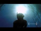 Дайвинг в воронке из сардин [GoPro]
