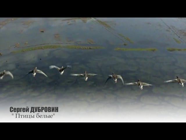 Сергей ДУБРОВИН - Птицы белые NEW 2016!