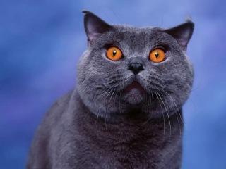 Ожившая картинка. Кот Дымка.