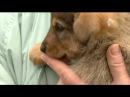 Живодеры задержаны за казнь собак в Челябинске