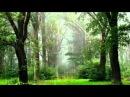 Спокойная Расслабляющая Музыка Шум Дождя Звуки Природы Релакс RELAX