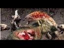 Самые безумные Бои животных снятые на камеру