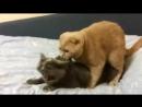 ебущиеся коты