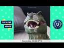 Purplecrumbs - Cocaine Dinosaur Best Vines Compilation - Best Viners September 2015 (online-video-cutter) (2)