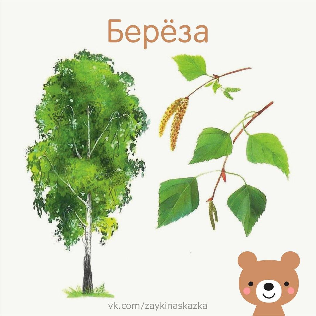 Дидактическая игра с какого дерева листок в картинках