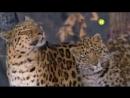 Видео для психологической разгрузки. Viasat Nature - Заставка канала .