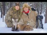 Как заместитель Министра Природных Ресурсов браконьерство организует, или Jimm Shockey и кабарга