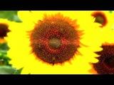 Nicholas Gunn - Sweet Nectar