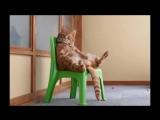 КОТЫ АРИСТОКРАТЫ в расслабоне. Смешные коты позируют как люди