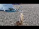 мы на пляже диком в Натании
