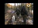 Лайка. Собака-человек. Из цикла Охота и рыбалка в Якутии.