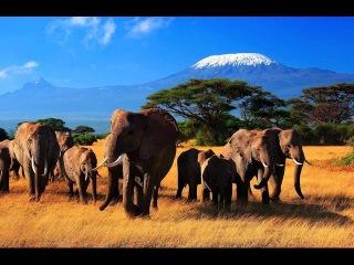 Дикий мир животных. Природа Африки. BBC. Документальный фильм.