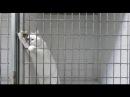 This Is Спарта - Тюрьма для котов