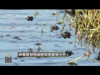 Миллиардер Чжу Чжимин (часть 02), или ''Ва Ван'' (Король Лягушек) - история бизнеса от первого лица, городской уезд Чжаланьтунь.