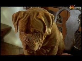Т/С Домик с собачкой 7 серия (2002г)