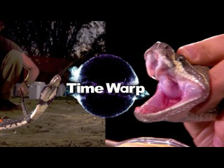 Искривление времени - Гремучая змея и плюющаяся кобра