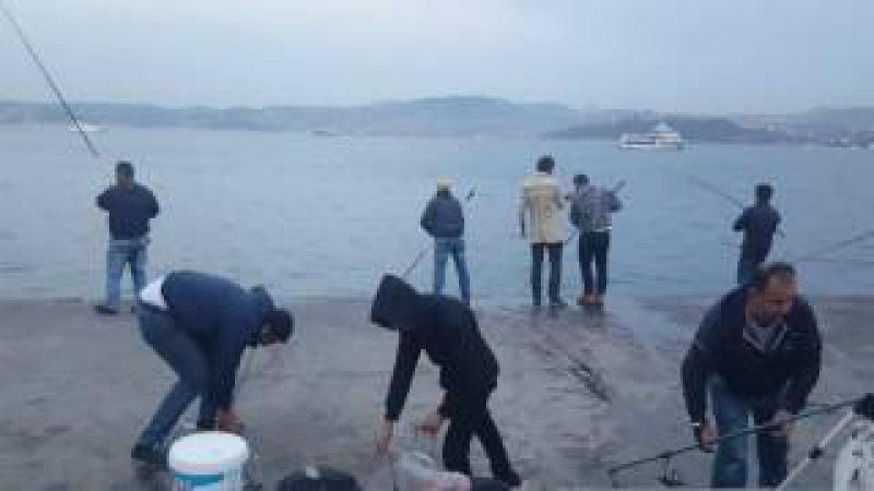 BÜYÜK VURGUN!! Emirgan Sahil Sıyırma Balık Avı