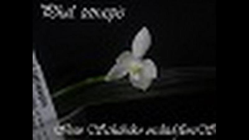 Орхидея. Распускается орхидея Phal. tetraspis от Schwerter