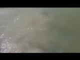 интересные_видео_у_меня_на_странице._vk.