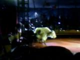 цирк шапито ,,,Алле'' в парке молодёжном 27.08.16