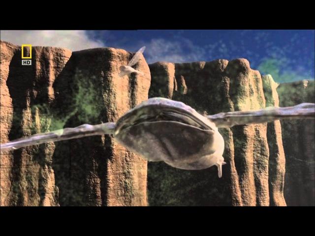 National Geographic: Жизнь в других мирах. Голубая луна