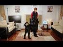 Как научить собаку вытирать морду после питья? (часть первая)