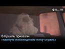 В Кремль доставили новогоднюю ель