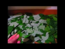 Ферментированный чай из листьев малины и вишни-своими руками-fermented tea, cherry and raspberry