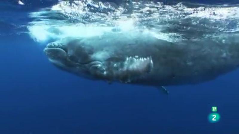 Grandes documentales Gigantes de las profundidades