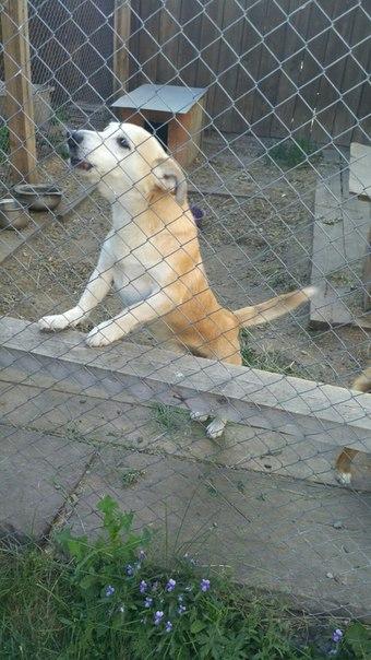 Пропала собака!!!!!! в октябрьском районе города Красноярска, в районе