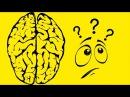 Как твой мозг обманывает тебя, делая жизнь хуже - Почему мозг враг мой и как мозг ...