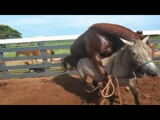 СЕКС С МАЛОЛЕТКОЙ 2Animals Horse Donkey Funny horse compilation 2017 HD part2