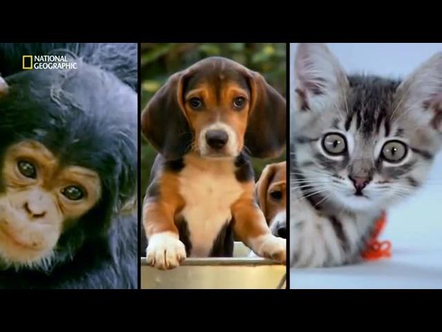Обезьяночеловек (National Geographic) 2 серия из 3-х