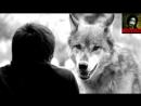Волчья преданность (стихотворение)