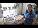 Семья Бровченко. Сравнение сушилок Волтера и Изидри. Сушим лук, морковь, грибы и лимон. 05.16г.