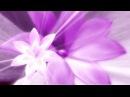 Видеофон Фиолетовый цветок