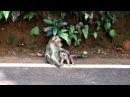 Покалеченный Sad baby monkey