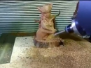 5 axis CNC machining center engraving a wood artcraft of pretty soldier sailor moon