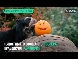 Животные отмечают Хэллоуин