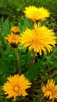 Какие цветы надо сажать на рассаду в январе-феврале 7