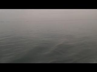 Дельфины в проливе
