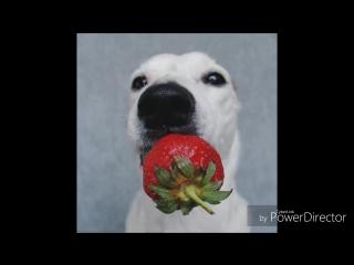 Собака Павлова или Клубничка🍓