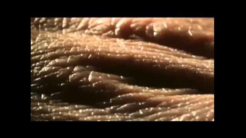 Вселенная твоего тела, микрокосмос dctktyyfz ndjtuj ntkf, vbrhjrjcvjc