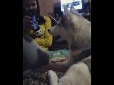 _anja_steinberg_ video