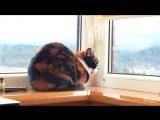 7 лайфхаков, которые упростят жизнь кота
