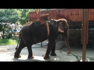 lmk-slon-lagaet