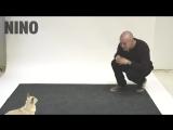 Как собаки реагируют, когда на них лают