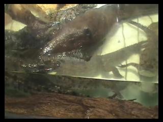 Тунис. Остров Джерба. Крокодиловая ферма.