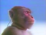Morning Motivation Monkey (Neon Talk Mashup)